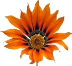 orange flower test 2